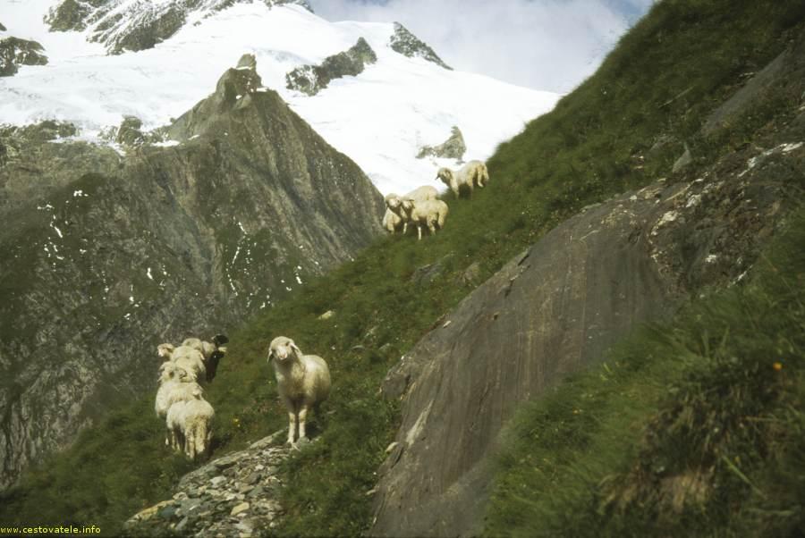 Ovce - Clarahütte