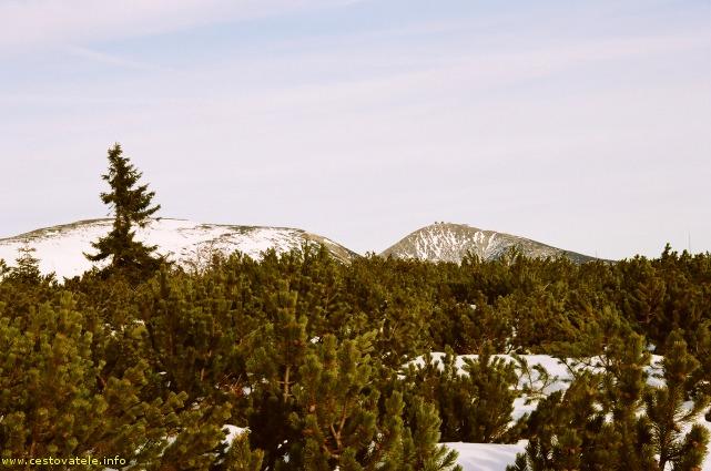 Sněžka z Liščí louky, Krkonoše