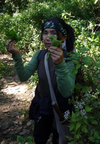 Is v džungli
