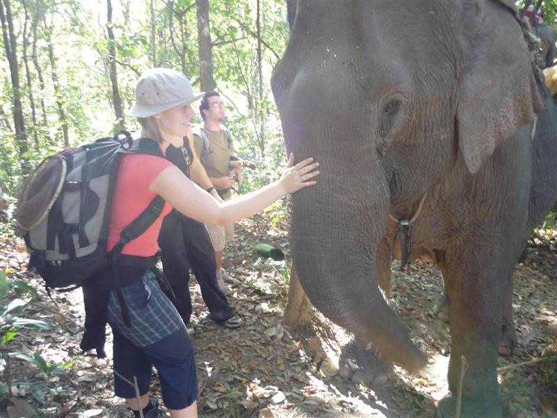 Sloni v džungli