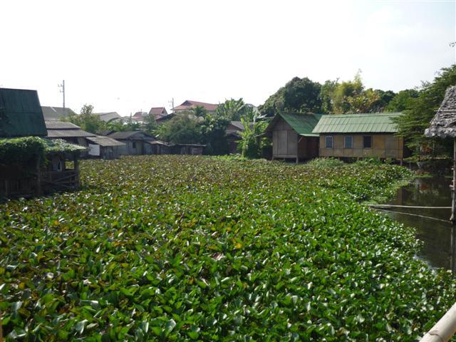 Zarostlý rybník mezi chrámem a ubytovnami mnichů.