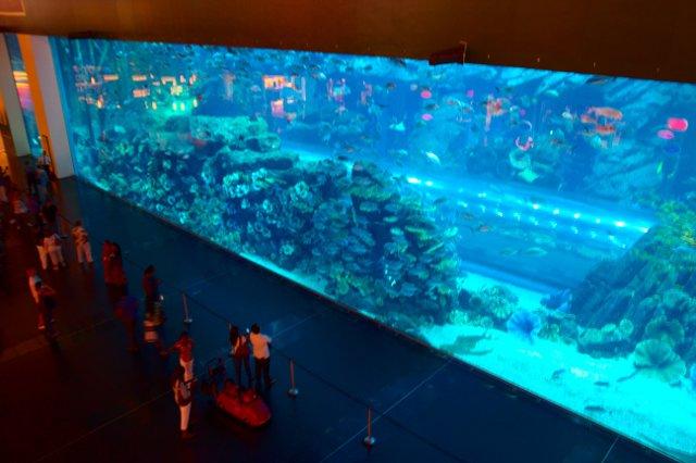 Dubajské akvárium (Dubai Aquarium - Under Water Zoo)