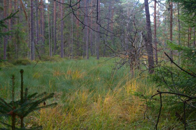 Lesní rašeliniště Dářko - Žďárské vrchy
