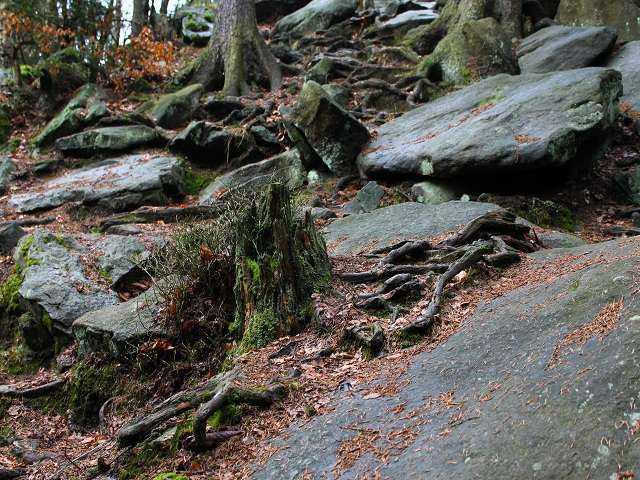 Okolí skalního útvaru Čtyři palice
