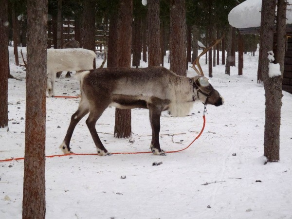 Sob pro vodku Finlandia pro rok 2012