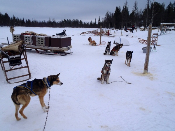 Husky farma