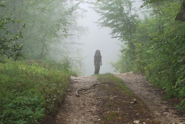 Kavkazským lesem