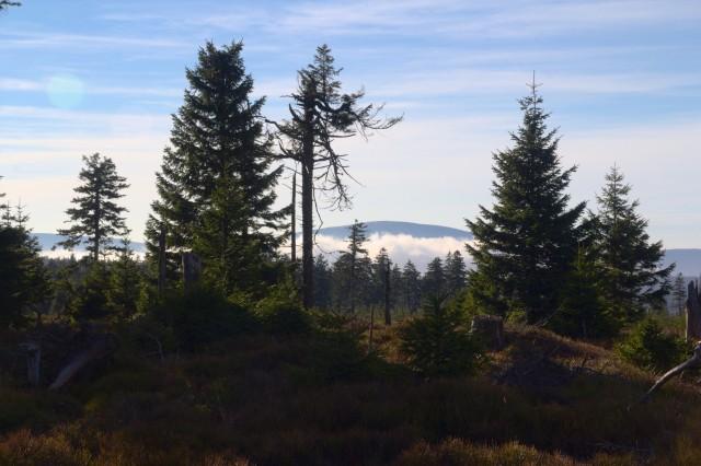 Výhled z vrcholu Smrk - Rychlebské hory