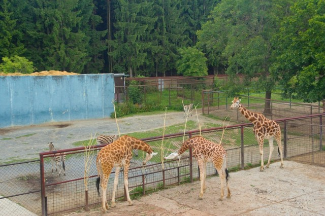 Výběh u pavilónu žiraf - ZOO Olomouc