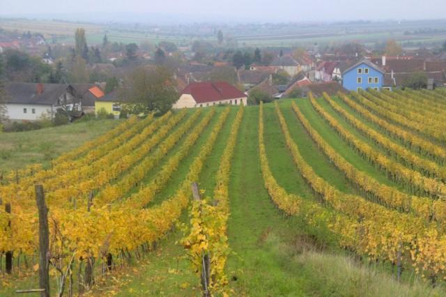Vinice a vinařská obec Oobberetzbach v Rakousku