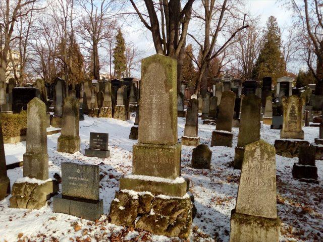 """""""Les"""" náhrobků na Židovském hřbitově"""