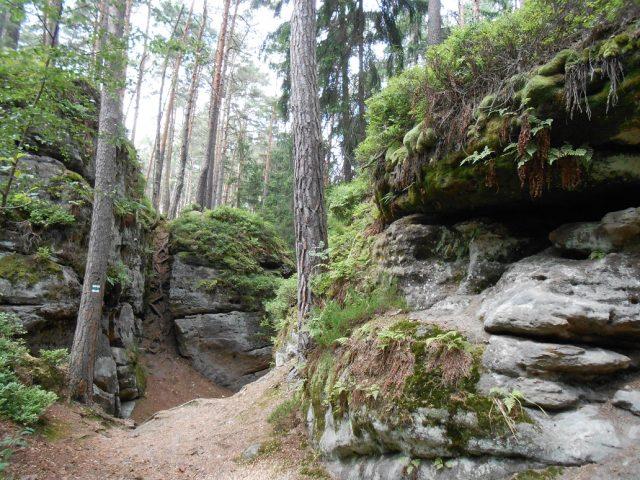 Cestou necestou hlubokým lesem