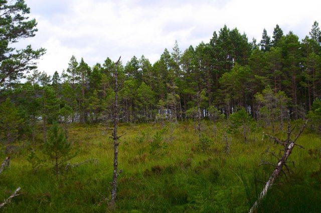 Okolí jezera Loch Morlich - Glenmore Forest Park, Skotsko