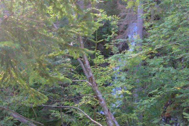 Bezejmenný přítok Studeného potoka, Roháče