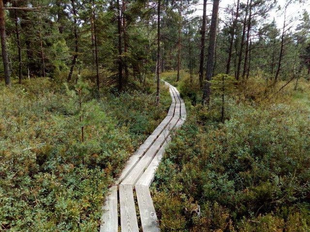 Dřevěný povalový chodník se vine podmáčenými místy stezky