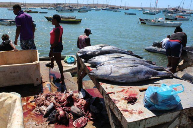 rybí trh v městečku Palmeira
