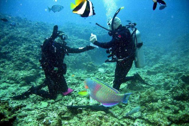 Při potápění budete poznávat rozmanitou mořskou faunu