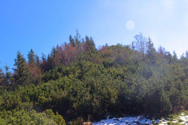 Malá Svišťovka ze Sedla pod Svišťovkou - Vysoké Tatry