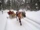 Obrázek k seriálu Laponsko 2012